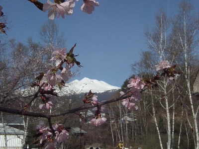 ようやく春がきました。