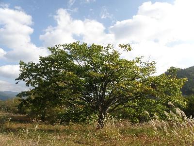 ♪気になる木♪
